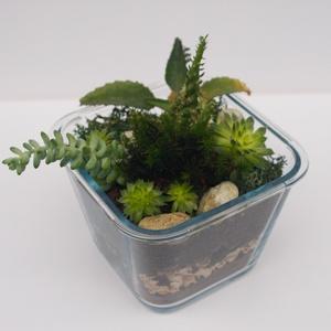 Négyzetes üveg terrárium pozsgás növényekkel, Otthon & Lakás, Dekoráció, Dísztárgy, Üvegművészet, Virágkötés, Pozsgás/szukkulens növényekkel és egy kis kaktusszal beültetett négyzetes alakú üveg terrárium, mely..., Meska