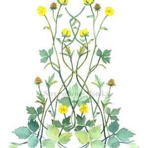 Bogláros szellőrózsa - Print (Akvarell), Művészet, Festmény, Akvarell, Fotó, grafika, rajz, illusztráció, Festészet, Meska
