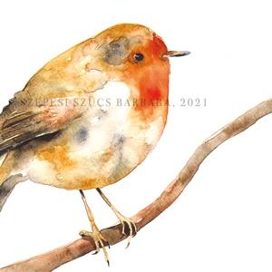 Vörösbegy - Print (Akvarell), Otthon & Lakás, Dekoráció, Kép & Falikép, Fotó, grafika, rajz, illusztráció, Rajongok a madarakért, csodálatos teremtmények és egy-egy ilyen illusztráció egészen meg tudja válto..., Meska