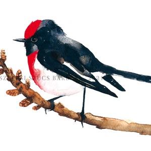 Pirossapkás cinegelégykapó - Print (Akvarell), Otthon & Lakás, Dekoráció, Kép & Falikép, Fotó, grafika, rajz, illusztráció, Rajongok a madarakért, csodálatos teremtmények és egy-egy ilyen illusztráció egészen meg tudja válto..., Meska