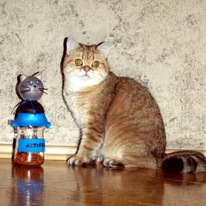 JutiFalat-tartó cicáknak, Otthon & lakás, Lakberendezés, Állatfelszerelések, Macska kellékek, Mindenmás, Zárható JutiFalat - tároló cicatartóknak..Amit a kedvenc és a gazdija is megérdemel.\nPraktikus megol..., Meska