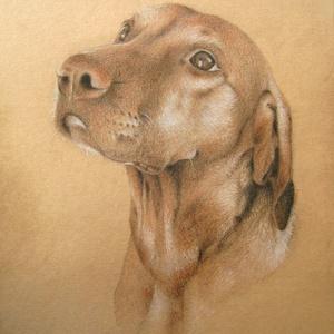 Rendelhető kutya portré - digitális fénykép alapján készült A4 méretű, ceruzával készült grafika, Otthon & lakás, Képzőművészet, Grafika, Rajz, Lakberendezés, Fotó, grafika, rajz, illusztráció, Egyedi megrendelésre készült grafika.\n\nMéret: A4\nTechnika: ceruza rajz\n\nHa te is szeretnél ilyet, ve..., Meska