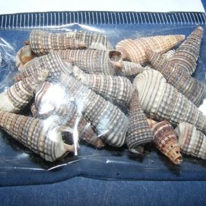 Natúr kagyló/csiga (8. minta/20 db) - orishell (csimbo) - Meska.hu