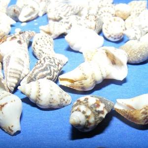Natúr kagyló/csiga (5/A minta/50 db) - mini csigák (csimbo) - Meska.hu