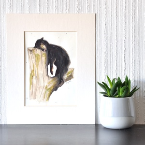 Nagy fekete kakas puma