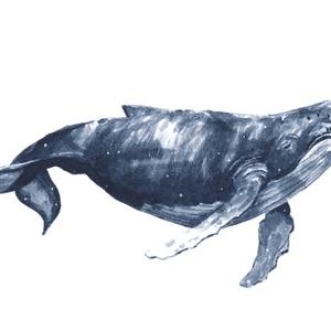 Kék bálna (óceán kolleckció) - ecsetfilc festmény (nyomat), Otthon & lakás, Képzőművészet, Festmény, Akvarell, Festészet, Kék bálna (óceán kollekció) - művészeti nyomat 190g-os papíron az eredeti ecsetfilc festmény alapján..., Meska