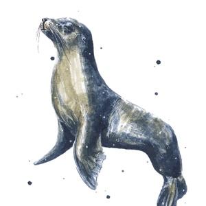 Fóka (óceán kollekció 2) - ecsetfilc festmény (nyomat), Otthon & lakás, Képzőművészet, Festmény, Akvarell, Festészet, Fóka (óceán kollekció 2)  - művészeti nyomat 190g-os papíron az eredeti ecsetfilc festmény alapján (..., Meska