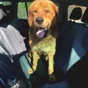 Autós ülésvédő kutyához, Otthon & Lakás, Kisállatoknak, Kutyáknak, Varrás, Ez az autós ülésvédő az egyik legpraktikusabb kiegészítő autóba, ami a kutyák utaztatásánál hatalmas..., Meska