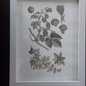 Vintage akvarell kép , Humulus lupulus/ Komló, Dekoráció, Otthon & lakás, Kép, Képzőművészet, Festmény, Festészet, Fotó, grafika, rajz, illusztráció, Merített papírra tus és akvarell technikával készült botanikai kép. Jól illik többek között a vintag..., Meska