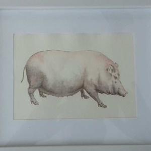 Vintage akvarell kép, Pig1/ Sertés1, Dekoráció, Otthon & lakás, Kép, Képzőművészet, Festmény, Festészet, Fotó, grafika, rajz, illusztráció, Merített papírra tus és akvarell technikával készült  kép. Jól illik többek között a vintage stílusú..., Meska