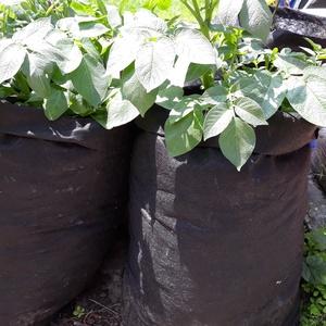 Ültető zsák 30 cm átmérőjű x 70 cm magas  (3 db/cs)/ burgonya és édesburgonya termesztéséhez, Otthon & Lakás, Ház & Kert, Növény & Veteményes, Varrás, Ültetőzsák, teraszra, balkonra, kis méretű kertekbe.\nAlkalmas burgonya, édesburgonya termesztéséhez...., Meska