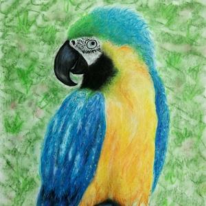 Papagáj, Művészet, Festmény, Pasztell, Fotó, grafika, rajz, illusztráció, Festészet, A3-as rajzlapra készült (42 cm * 29,7 cm) rajz, porpasztell krétával készítve, dedikált. A papagáj p..., Meska