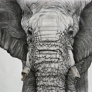Elefánt, Művészet, Grafika & Illusztráció, Fotó, grafika, rajz, illusztráció, A3-as rajzlapra készült (42 cm * 29,7 cm) rajz, fekete rajzeszközökkel, kérésre dedikálható. Az elef..., Meska