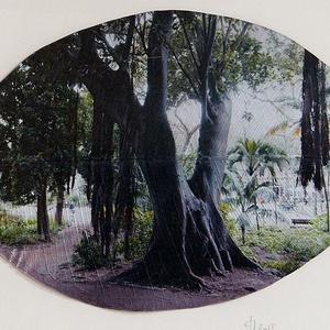 Lisszabon-Jardim Da Estrela, trópusi fügefa, Művészet, Fotográfia, Fotó, grafika, rajz, illusztráció, Fikusz levélre készített kép egy trópusi fügefáról. Egyetlen darab készült belőle. Mérete 15x23 cm, ..., Meska