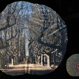 La Devesa Park Girona 2017 - Lótusz levélen 2020, Művészet, Fotográfia, Fotó, grafika, rajz, illusztráció, A Budapesti Füvészkertből külön engedéllyel elkért Lótusz levél különlegesen szép, matt mohazöld szí..., Meska