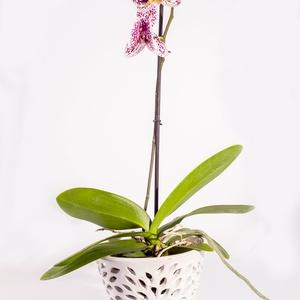 Orchidea kerámia kaspó, Otthon & Lakás, Ház & Kert, Cserép & Kaspó, Kerámia, A képeken látható speciális kerámia kaspóba a virág közvetlenül beleültethető! Elkerülhetjük a műany..., Meska