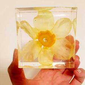 Nárcisz gyanta ajándék, Otthon & Lakás, Dekoráció, Asztaldísz, Virágkötés, Mézédes illatot árasztó, kertekben burjánzó nárcisz ágyás, mely a tavasz jellegzetes virága és ilyen..., Meska