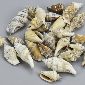 Vegyes csigák 4-6cm 10dkg/csomag, Dekorációs kellékek, Egyéb kellékek, Vegyes alapanyag, Virágkötészet, Mindenmás, Decoupage, szalvétatechnika, Vegyes csigák 4-6cm 10dkg/csomag kb.  30 db\nPostázás a mindenkori Magyar Posta illetve futárszolgála..., Meska