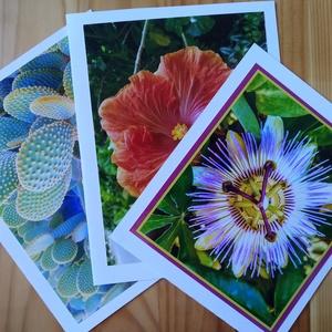 3 kinyitható kèpeslap saját fotóval - hibiszkusz, kaktusz, golgotavirág, Otthon & lakás, Naptár, képeslap, album, Képzőművészet, Képeslap, levélpapír, Fotó, grafika, rajz, illusztráció, Hibiszkusz, kaktusz, golgotavirág saját fotókon, ès fehèr karton. Ezekből kèszültek a kèpeslapok. Ha..., Meska