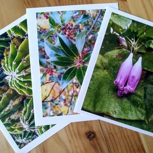 3 képeslap saját fotóval - kaktusz, lila virág, pirosbogyós, Otthon & lakás, Naptár, képeslap, album, Képzőművészet, Fotográfia, Képeslap, levélpapír, Fotó, grafika, rajz, illusztráció, Saját fotókból készítettem ezeket a képeslapokat. A fotók részben itthon, részben Horvátországban ké..., Meska