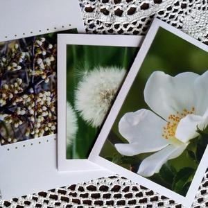 3db kinyitható képeslap saját fotóval - fehér virágok, Képeslap & Levélpapír, Papír írószer, Otthon & Lakás, Fotó, grafika, rajz, illusztráció, Saját fotóim idén készültek, magyarországon, többnyire az otthonomhoz közel. Fehér tónusú virágok, p..., Meska