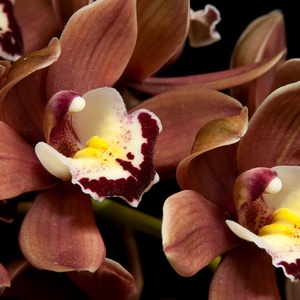 Chocolate orchid mangóvajas egyedi orchidea szappan női ajándék szülinapra névnapra normál száraz zsíros érett bőrre (medalin) - Meska.hu