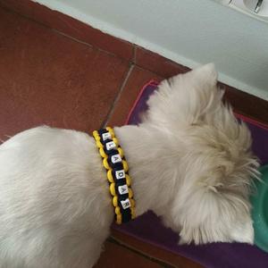 Neves kutya nyakörv (moncili) - Meska.hu