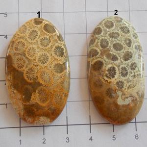Natural Teleflora Fossil Coral 7, Gyöngy, ékszerkellék, Cabochon, AAA+++ minőségű Corall fossilia féldrágakövek! Mind gyönyörű mintás, szép fényesre csiszolva!    Az ..., Meska