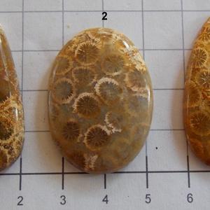 Natural Teleflora Fossil Coral 10, Gyöngy, ékszerkellék, Cabochon, AAA+++ minőségű Corall fossilia féldrágakövek! Mind gyönyörű mintás, szép fényesre csiszolva!    Az ..., Meska