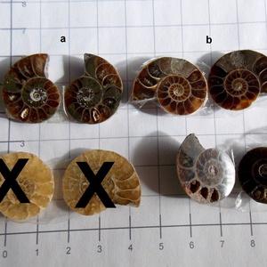 Ammonite  2, Gyöngy, ékszerkellék, Cabochon, Nagyon különlegesek ezek a csigák. Finom rajzolatuk szó szerint egy csoda!  Több minden lehet  belől..., Meska