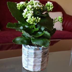 Nagy méretű virág kaspó, Cserép & Kaspó, Ház & Kert, Otthon & Lakás, Fonás (csuhé, gyékény, stb.), Egyedi, papírból készült virág kaspó. Elkészítésekor a papírokat úgy válogatom össze, hogy abból bár..., Meska