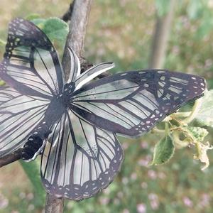 Pillangó  - Zsugorka kitűző, Ékszer, Kitűző, bross, Átlátszó zsugorkára rajzoltam ezt a pillangót.   Mérete: 65 x 45 mm  Termékeim között hozzáillő szár..., Meska