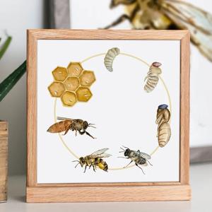 Montessori fali kép, Montessori edukációs fali dekor, vászonkép, gyerekszoba fali poszter, méz, méhecske poszter, Otthon & Lakás, Dekoráció, Kép & Falikép, Fotó, grafika, rajz, illusztráció, Montessori edukációs fali kép gyerekszobába, tanterembe\n\nHogy hogyan készül a méz? Kövesd a méhecske..., Meska