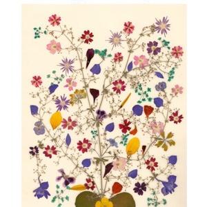 10 db Születésnapi üdvözlőlap, préselt virág nyomat, szülinapi jókivánság, ajándék, , Képeslap & Levélpapír, Papír írószer, Otthon & Lakás, Fotó, grafika, rajz, illusztráció, Mindenmás, 10 db Születésnapi üdvözlőlap, préselt virág nyomat - FMS 52a\n\nA virágok életében, a préselés, olyan..., Meska