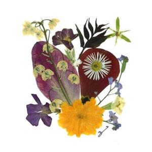 10 db Üdvözlőlap, préselt virág nyomat, ajándék, , Képeslap & Levélpapír, Papír írószer, Otthon & Lakás, Fotó, grafika, rajz, illusztráció, Mindenmás, 10 db Üdvözlőlap, préselt virág nyomat - FMS O 001\n\nA virágok életében, a préselés, olyan, mintha me..., Meska
