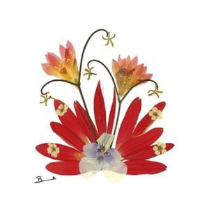 10 db Üdvözlőlap, préselt virág nyomat, ajándék, , Otthon & Lakás, Papír írószer, Képeslap & Levélpapír, Fotó, grafika, rajz, illusztráció, Mindenmás, 10 db Üdvözlőlap, préselt virág nyomat - FMS O 010\n\nA virágok életében, a préselés, olyan, mintha me..., Meska