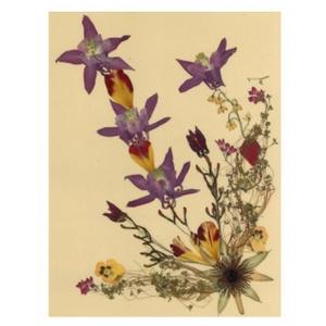 10 db Üdvözlőlap, préselt virág nyomat, ajándék, , Otthon & Lakás, Papír írószer, Képeslap & Levélpapír, Fotó, grafika, rajz, illusztráció, Mindenmás, 10 db Üdvözlőlap, préselt virág nyomat - FMS O 057\n\nA virágok életében, a préselés, olyan, mintha me..., Meska