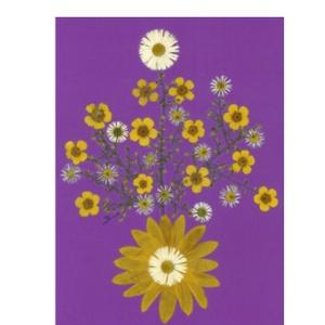 10 db Üdvözlőlap, préselt virág nyomat, ajándék, , Otthon & Lakás, Papír írószer, Képeslap & Levélpapír, Fotó, grafika, rajz, illusztráció, Mindenmás, 10 db Üdvözlőlap, préselt virág nyomat - FMS O 058\n\nA virágok életében, a préselés, olyan, mintha me..., Meska