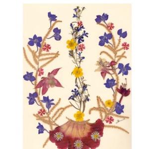 10 db Üdvözlőlap, préselt virág nyomat, ajándék, , Otthon & Lakás, Papír írószer, Képeslap & Levélpapír, Fotó, grafika, rajz, illusztráció, Mindenmás, 10 db Üdvözlőlap, préselt virág nyomat - FMS O 059\n\nA virágok életében, a préselés, olyan, mintha me..., Meska