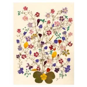 10 db Üdvözlőlap, préselt virág nyomat, ajándék, , Otthon & Lakás, Papír írószer, Képeslap & Levélpapír, Fotó, grafika, rajz, illusztráció, Mindenmás, 10 db Üdvözlőlap, préselt virág nyomat - FMS O 060\n\nA virágok életében, a préselés, olyan, mintha me..., Meska