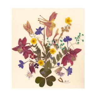 10 db Üdvözlőlap, préselt virág nyomat, ajándék, , Otthon & Lakás, Papír írószer, Képeslap & Levélpapír, Fotó, grafika, rajz, illusztráció, Mindenmás, 10 db Üdvözlőlap, préselt virág nyomat - FMS O 063\n\nA virágok életében, a préselés, olyan, mintha me..., Meska