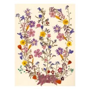 10 db Üdvözlőlap, préselt virág nyomat, ajándék, , Otthon & Lakás, Papír írószer, Képeslap & Levélpapír, Fotó, grafika, rajz, illusztráció, Mindenmás, 10 db Üdvözlőlap, préselt virág nyomat - FMS O 064\n\nA virágok életében, a préselés, olyan, mintha me..., Meska