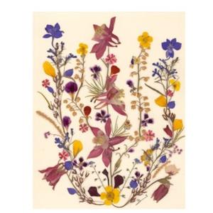 10 db Üdvözlőlap, préselt virág nyomat, ajándék, , Otthon & Lakás, Papír írószer, Képeslap & Levélpapír, Fotó, grafika, rajz, illusztráció, Mindenmás, 10 db Üdvözlőlap, préselt virág nyomat - FMS O 065\n\nA virágok életében, a préselés, olyan, mintha me..., Meska