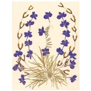 10 db Üdvözlőlap, préselt virág nyomat, ajándék, , Otthon & Lakás, Papír írószer, Képeslap & Levélpapír, Fotó, grafika, rajz, illusztráció, Mindenmás, 10 db Üdvözlőlap, préselt virág nyomat - FMS O 076\n\nA virágok életében, a préselés, olyan, mintha me..., Meska