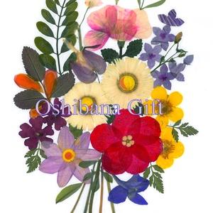 Préseltvirág kép nyomat, rámázható, ajándék LM1 22, Otthon & Lakás, Dekoráció, Falra akasztható dekor, Fotó, grafika, rajz, illusztráció, Mindenmás, Préselt virág nyomat - \n\nA virágok életében, a préselés, olyan, mintha meghosszabitanánk ezek  életé..., Meska