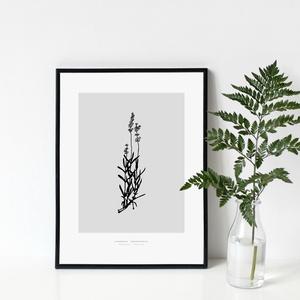 BOTANIKA sorozat - Levendula poszter / skandináv stílusú, modern, minimalista poszter nagy méretben / 50 x 70 cm, Otthon & lakás, Dekoráció, Kép, Lakberendezés, Falikép, Képzőművészet, Illusztráció, Fotó, grafika, rajz, illusztráció, LEVENDULA poszter\n\nAki a virágot szereti...\nAzt hiszem, sokan tartozunk ebbe a kategóriába :)\n\nBotan..., Meska