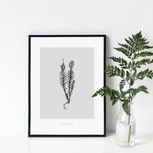 BOTANIKA sorozat - Gyújtoványfű poszter / skandináv stílusú, modern, minimalista poszter nagy méretben / 50 x 70 cm, Otthon & lakás, Dekoráció, Kép, Lakberendezés, Falikép, Képzőművészet, Illusztráció, Fotó, grafika, rajz, illusztráció, GYÚJTOVÁNYFŰ poszter\n\nAki a virágot szereti...\nAzt hiszem, sokan tartozunk ebbe a kategóriába :)\n\nBo..., Meska