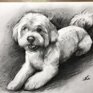 kutya portré rajzolás / szénceruza - 1 személyes / Ajándékozz szénceruza portrét, Portré, Portré & Karikatúra, Művészet, Fotó, grafika, rajz, illusztráció, Valósághű, kidolgozott, erős dinamikus megjelenést kölcsönöz a portrénak. Minél jobb minőségű fotóra..., Meska