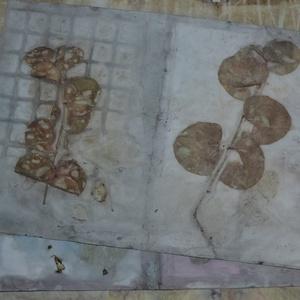 Eco print technikával készült borítékok , Naptár, képeslap, album, Otthon & lakás, Képeslap, levélpapír, Papírművészet, A papír mintázatát ecoprint technikával készítettem. Az ecoprint, vagyis a növényekkel való nyomatké..., Meska
