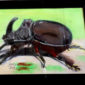 """3D-s orrszarvú bogár, Otthon & lakás, Dekoráció, Kép, Képzőművészet, Grafika, Napi festmény, kép, Fotó, grafika, rajz, illusztráció, Olajpasztell krétával készült orrszarvú bogár, 170g/m2-es rajzlapra.\nEz a rovar a \""""különleges szépsé..., Meska"""